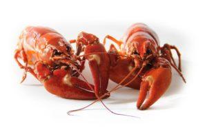 Információk a magas asztaxanthin tartalmú krill olajról